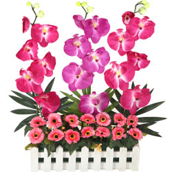 Divine Long Lasting Orchids Floral Garden with Love