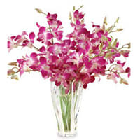Tender Orchids Arranged in a Glass Vase