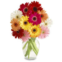 Arrangement of Assorted Gerberas in a Big Vase