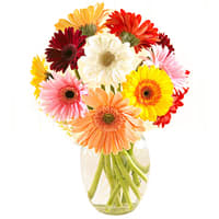 Clustered One Dozen Gerberas with Decorative Vase