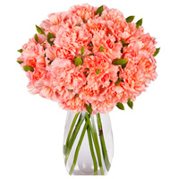 Bright Pink Carnations in a Vase