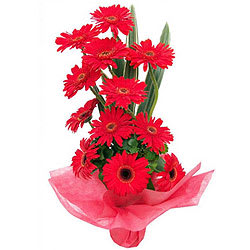Amazing Red Gerberas Arrangement