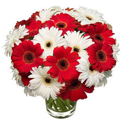 Arrangement of Gerberas in Glass Vase