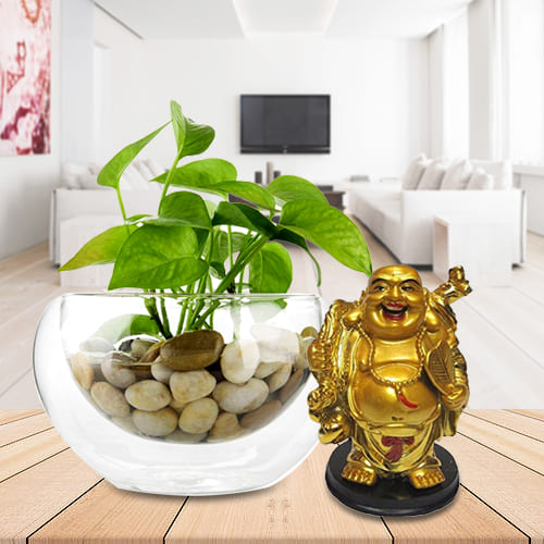 Indoor Gift of Money Plant in a Glass Vase with Money Growing Laughing Buddha Idol<br>