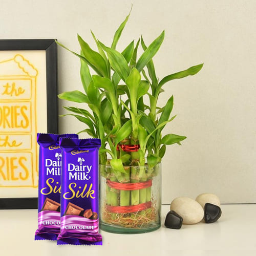Eye-Catching 2 Tier Bamboo Plant in Glass Pot with Chocolates