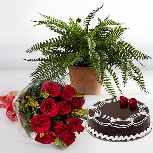Good Luck Indoor Plant with Cake N Red Roses Bouquet
